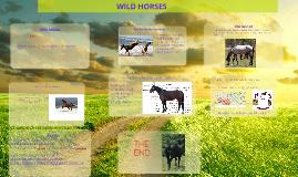Copy of wild horses