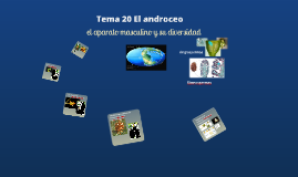 2017. El androceo. (T20) para Ambientales
