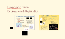 BI 3: Eukaryotic Gene Regulation