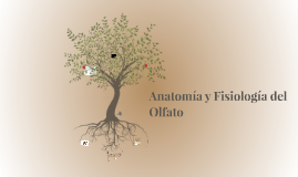 Anatomía y Fisiología del Olfato