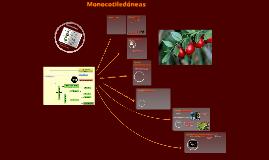 2017. Monocotiledóneas  (T24) para Biotecnología