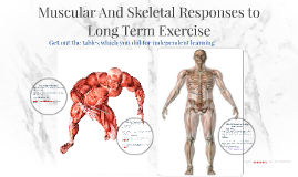Long term muscular and skeletal responses to exercise.