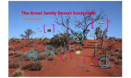 Copy of The Great Sandy Desert