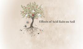 Effect of Acid Rain on Soil (Group IV Project)