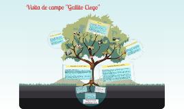 "Copy of Visita de campo: ""Gallito Ciego"""
