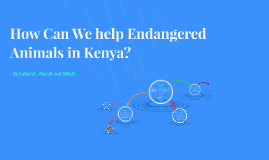 How can we help Endangered Animals in Kenya?