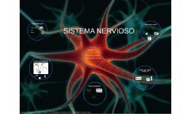 Copy of SISTEMA NERVIÓS PERIFÈRIC