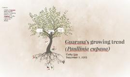 Guarana - Paullinia cupana