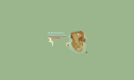Copy of The  Marine Iguana  or  Amblyrhynchus  cristatus