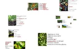Copy of Le potager