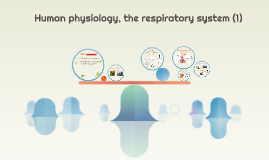 Human physiology, the respiratory system