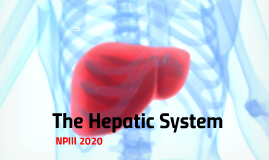 The Hepatic System