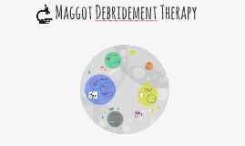 Copy of Maggot Debridement Therapy