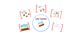 Introduction to life cycles