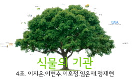 식물의 기관