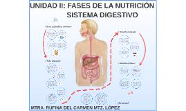 Bioquímica Unidad II: Fases de la Nutrición- Sistema Digestivo