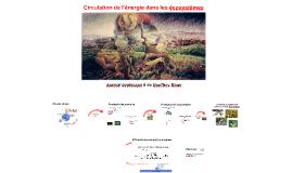 C9 - Circulation de l'énergie dans les écosystèmes