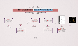 The Evolution of Equus ferus caballus