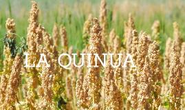 QUINOA- TECNICA DIETETICA