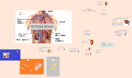 Copy of Fisiologia del Sistema Renal