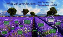 White Oak Lavender Farm