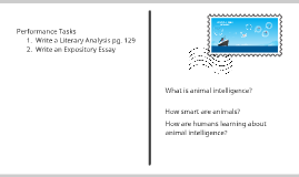 Collection 2:  Animal Intelligence