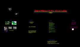 Zebra Mussel in the Great Lakes