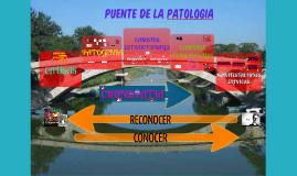 INFARTO AGUDO DE MIOCARDIO-PUENTE DE LA PATOLOGIA