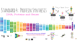 Standard 4:  Protein Synthesis