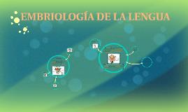 EMBRIOLOGIA DE LA LENGUA