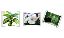 Fotosíntesis y Respiración de una planta
