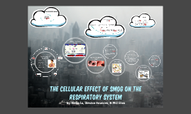 The Cellular Effect of Smog on the respiratory system