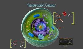 Copy of Respiración celular