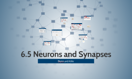 6.5 Neurons and Synapses