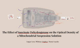 The Effect of Succinate Dehydrogenase on the Optical Density