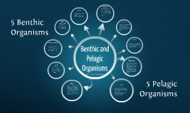 Benthic and Pelagic Organisms