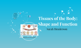Tissues of the Body: Shape and Function