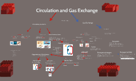 Copy of Circulation and Gas Exchange