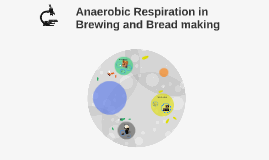 Anaerobic Respiration in the Brewing and Breadmaking