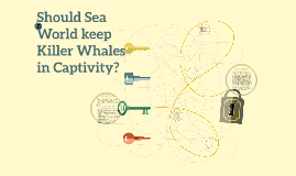 Copy of Should Sea World keep Killer Whales in Captivity?