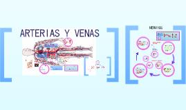 Copy of ARTERIAS, VENAS Y NERVIOS..MIEMBRO SUPERIOR E INFERIOR