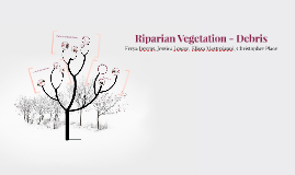 Riparian Vegetation - Debris