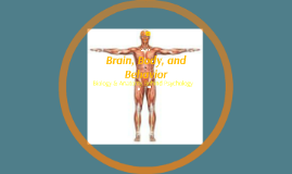 Brain, Body, and Behavior