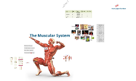 Copy of The Muscular System (1)