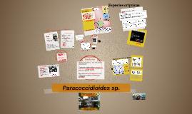 Paracoccidoides sp.