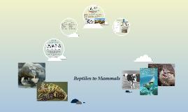 Reptiles to Mammals