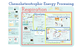 Copy of AP Bio- Metabolism 2: Chemoheterotrophic Nutrition