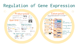 AP Bio Prezi 31 - Regulation of Gene Expression