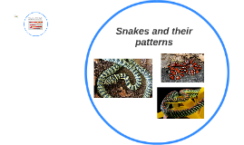 Snakes and their patterns