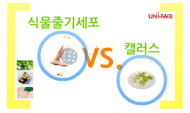 Copy of Plant Stem Cell vs. Callus (KOR)